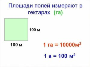 Чему равен 1 га в сотках