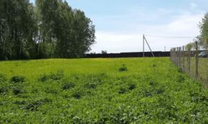 Как получить бесплатно землю под лпх