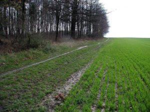 Колхозные земельные паи сельхозназначения по наследству